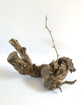 Fortuity  (studies In self healing 11 ), 2017  Gold plated silver cast of a thorned twig, dead wood 20cm  x 22cm x 15cm