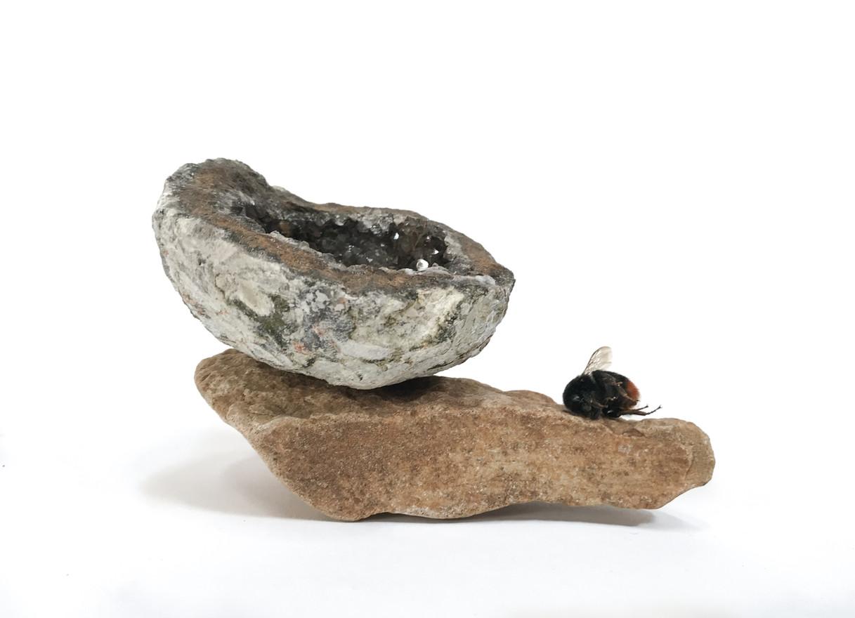 Until You Are A Black Tree, 2018 Geode, Rock, Honey Bee 9cm x  14cm  x 8cm