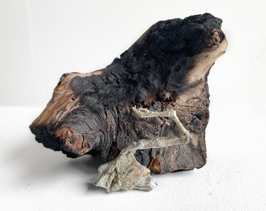 Vegetative Seed, 2020 Tin cast of dessicated toad limb, charred wood