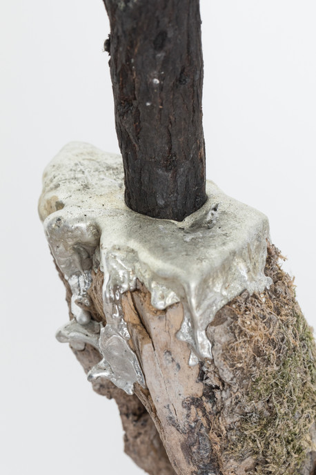 Jacob's Ladder (detail),  2019 Liana (woody vine), tin, charred branch, concrete, pigment 156 x 35 x 15cm