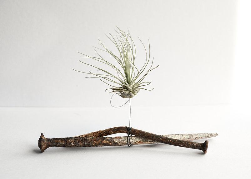 Chantal Powell Airplant Sculpture-2.jpg