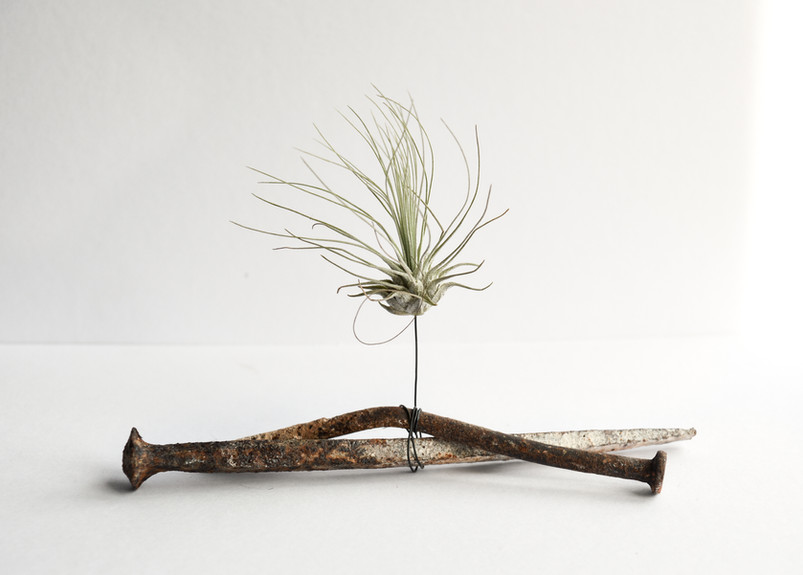 Chantal Powell Airplant Sculpture-2.jpg