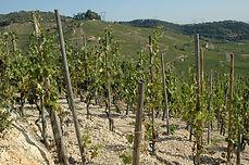 vigne à Cornas