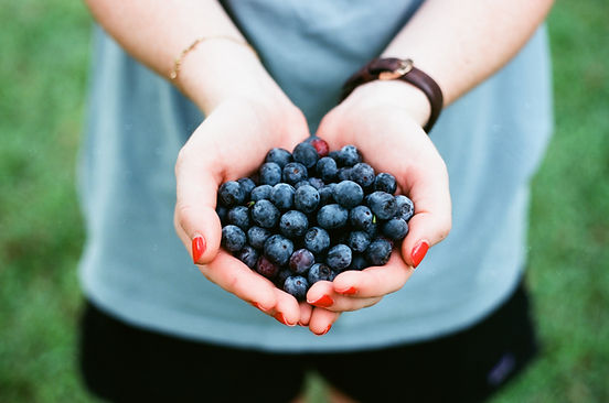A hand full of healthy blueberries