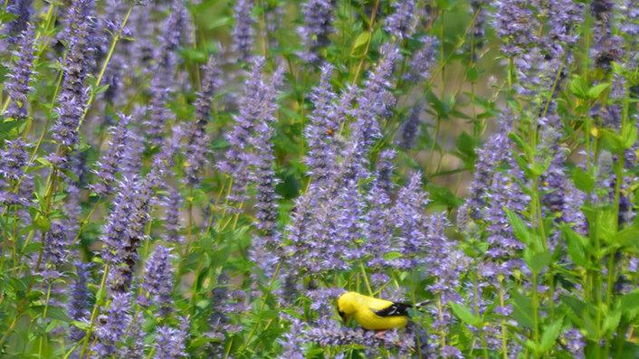 Pollinator Plant Kit