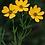 Thumbnail: Pollinator Plant Kit