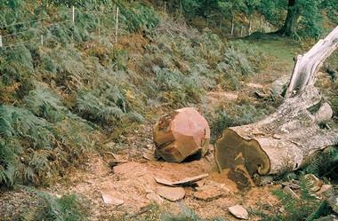 Wooden Boulder by David Nash