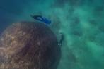 Geeking with Destination Venus Episode #19:Resilient Reef