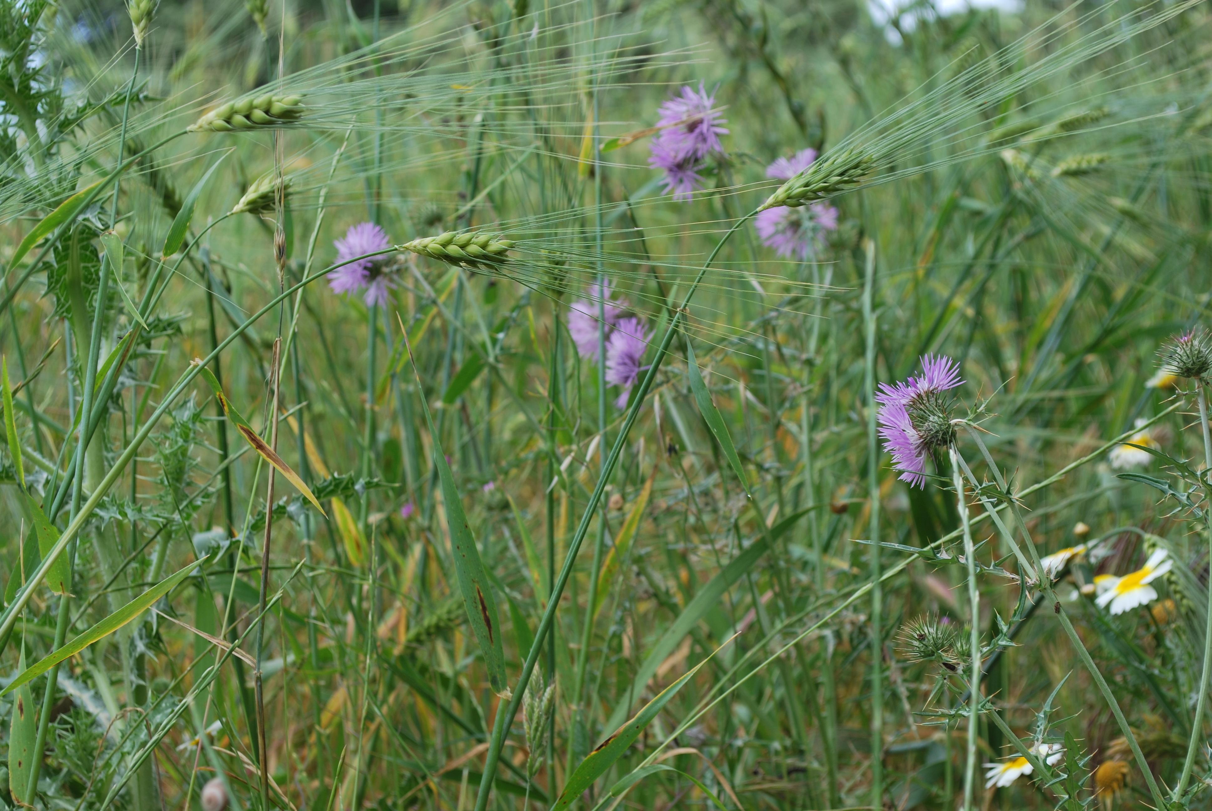 flores silvestres y cultivo ecológic