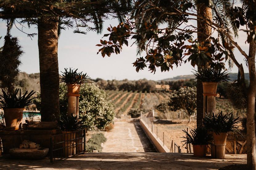 Vista de los viñedos desde la terraza