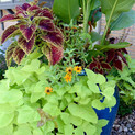 full bloom pot.jpg