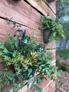 Succulent Feature Wall