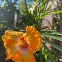 Summer Blooms 4.jpeg