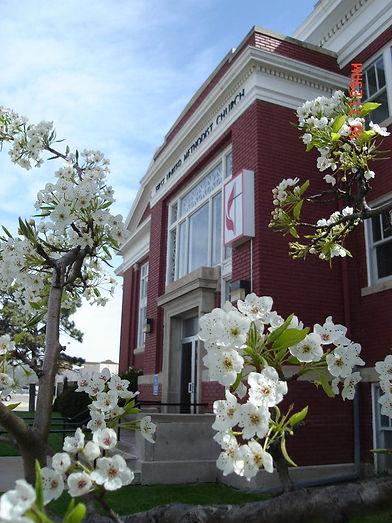 First UMC Cherry Blossoms.jpg