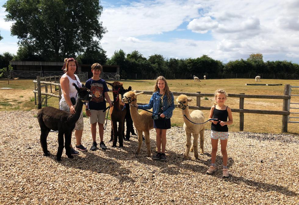 alpacas-group.jpg