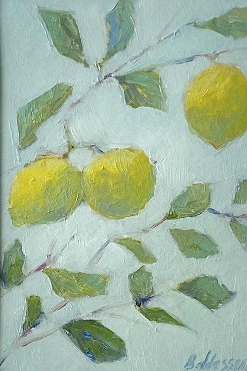 Lemon tree, #2