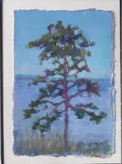 Pine on the Bay