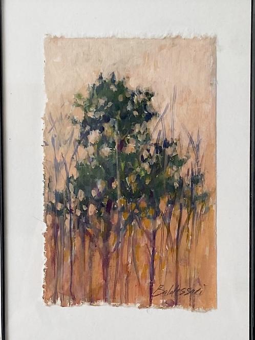 Tree at Sunset Study