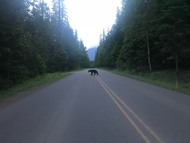 Going to the Sun Road at dawn