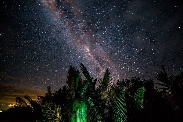 jungle night.jpg