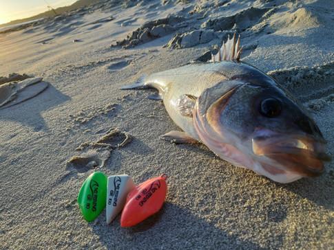 SPIGOLA M2 FISHING