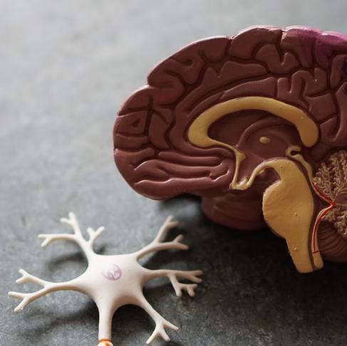 Как проникнуть в мозг?