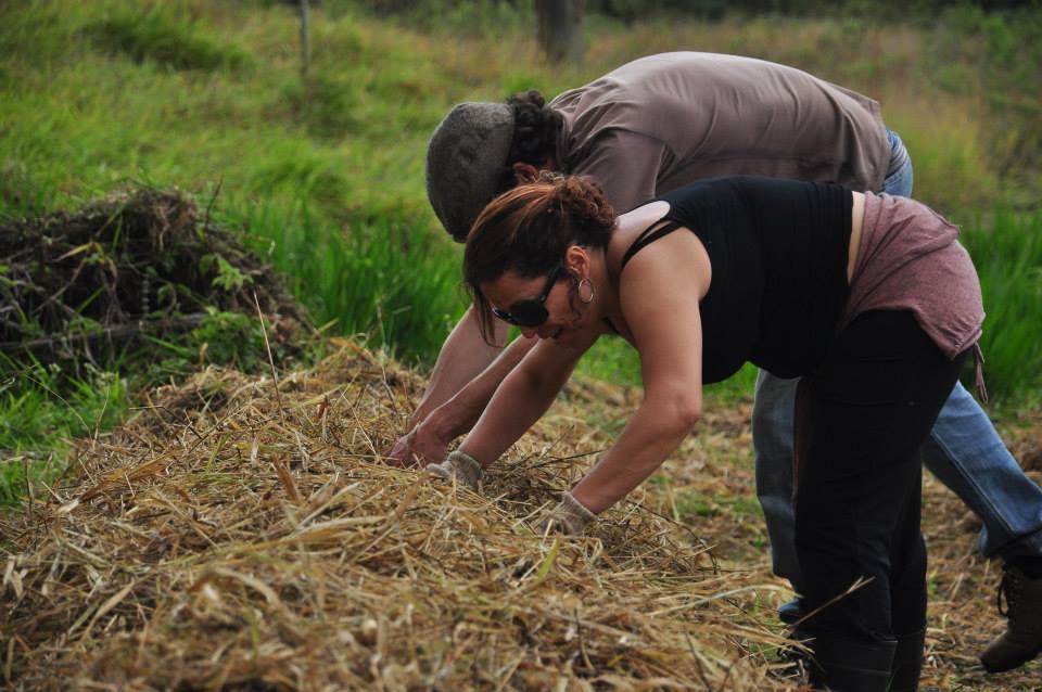 Colocando cobertura vegetal no solo