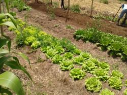 Horta Orgânico/Biodinâmica