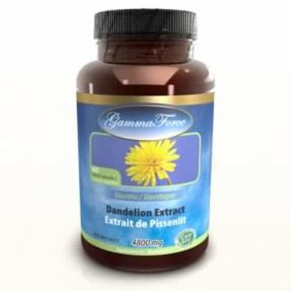 GammaForce Pissenlit 480 mg 60 caps