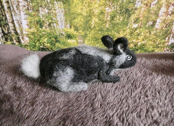 Black and grey rabbit