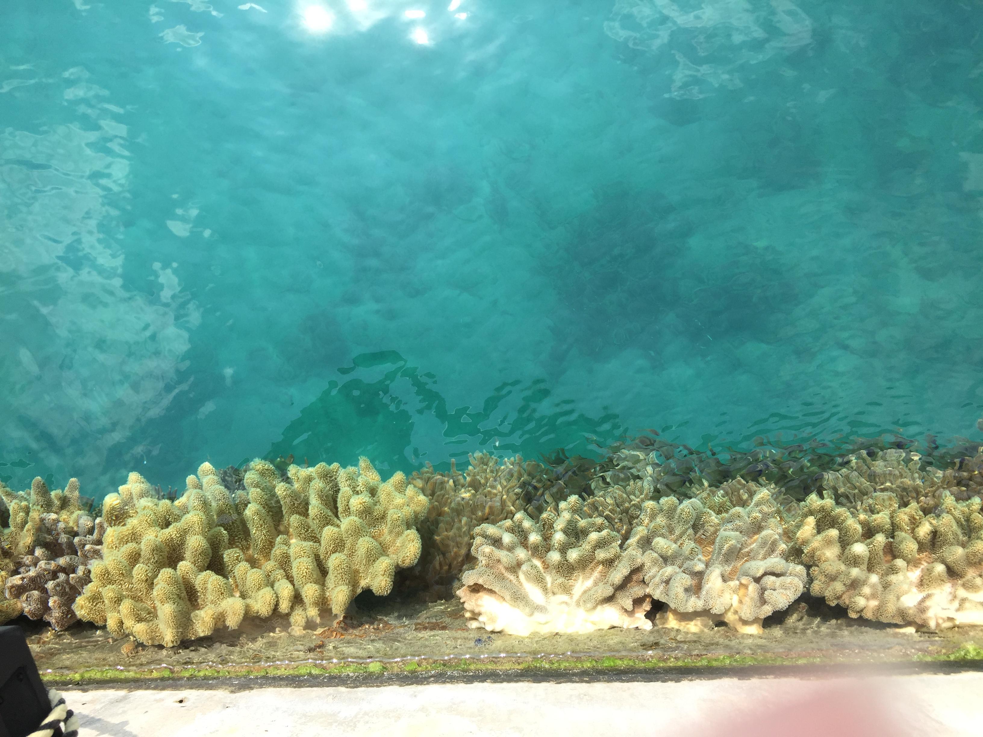久高島の珊瑚