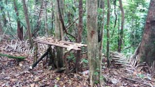 Armada desmanteló campamentos de grupos delincuenciales en Bahía Solano