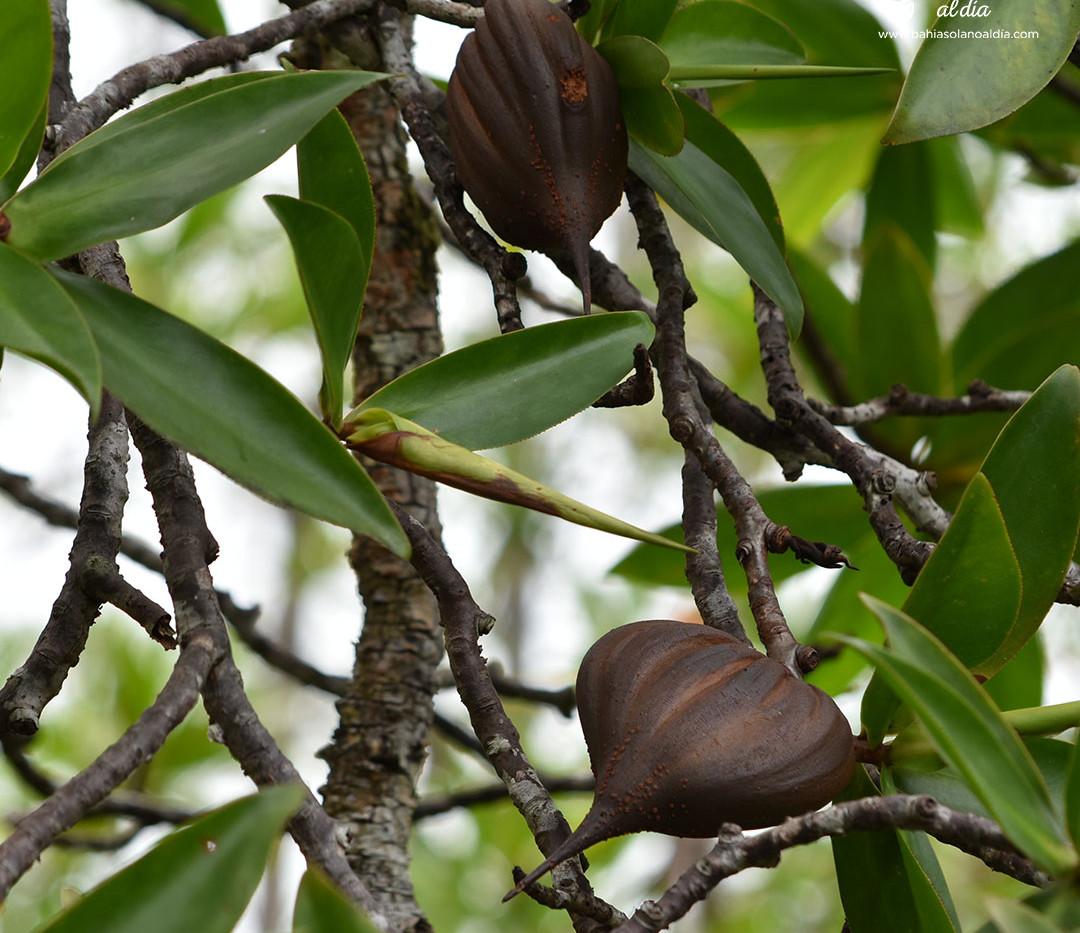 manglares5.jpg