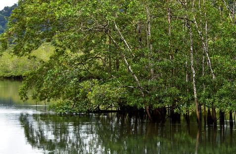 manglares 1.png