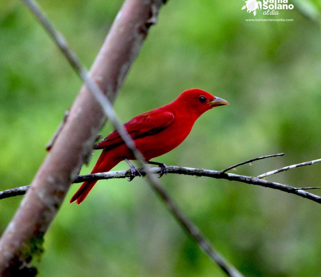 pájaro rojo.jpg