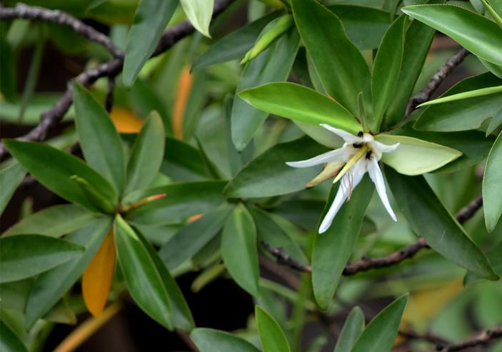 manglares 4.png