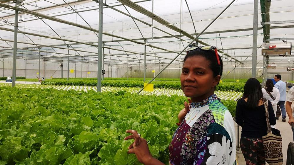 la innovación aplicada a la producción alimentaria, es una de las cosas en que China ha avanzado.
