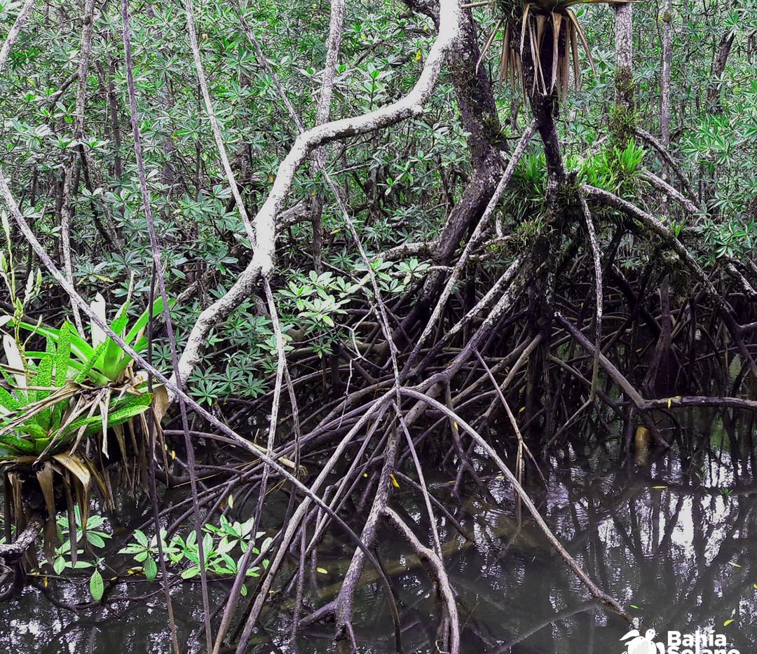 manglares 2.jpg