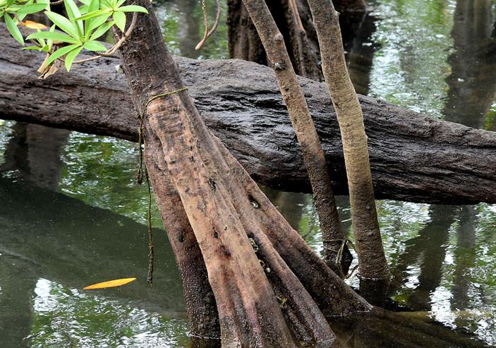 manglares7.jpg