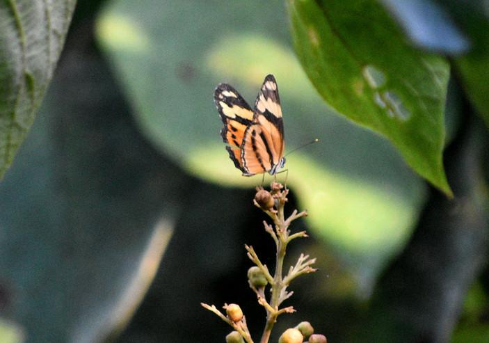 mariposa naranja con logo.jpg