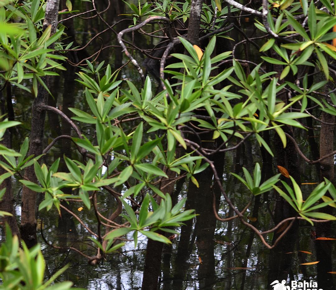 manglares3.png