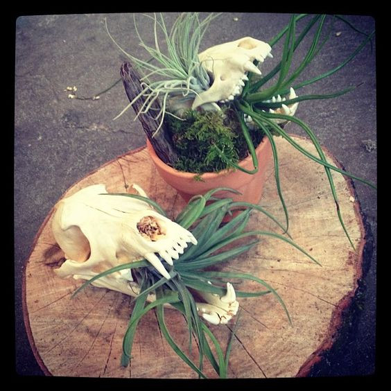 Skull terrariums   Taxidermy terrarium planters   Skull art