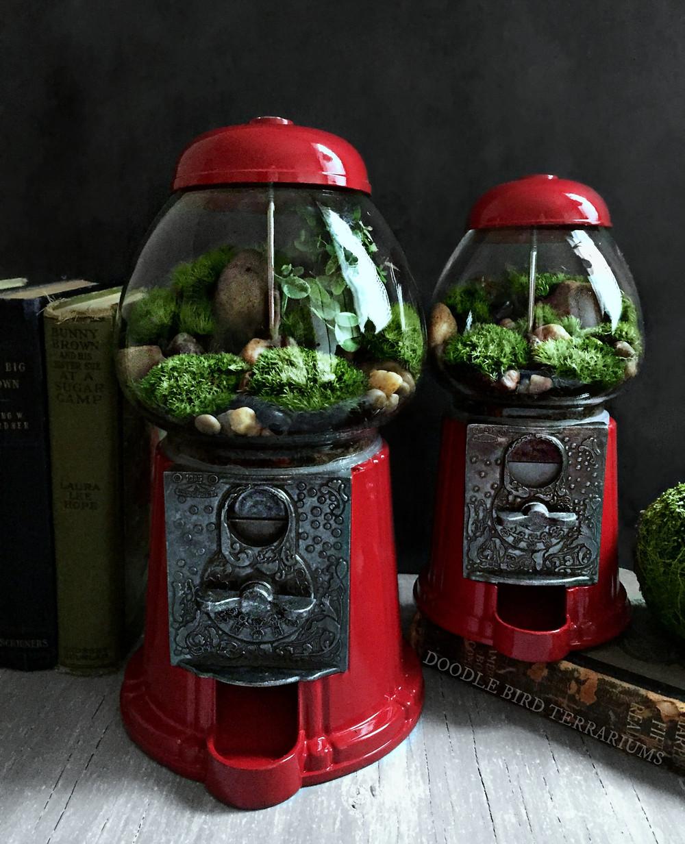 DIY Upcycled gumball machine terrarium