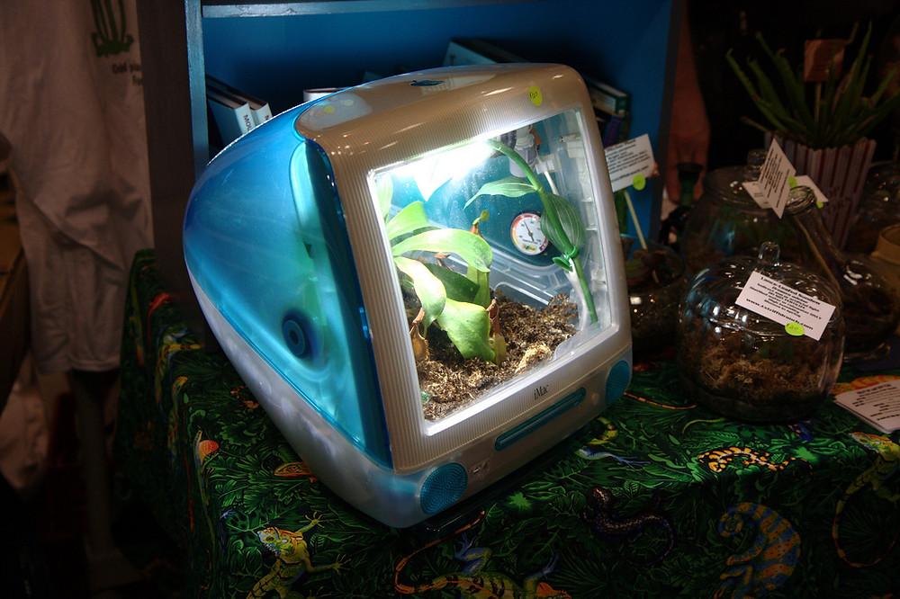 Upcycled iMac Computer terrarium