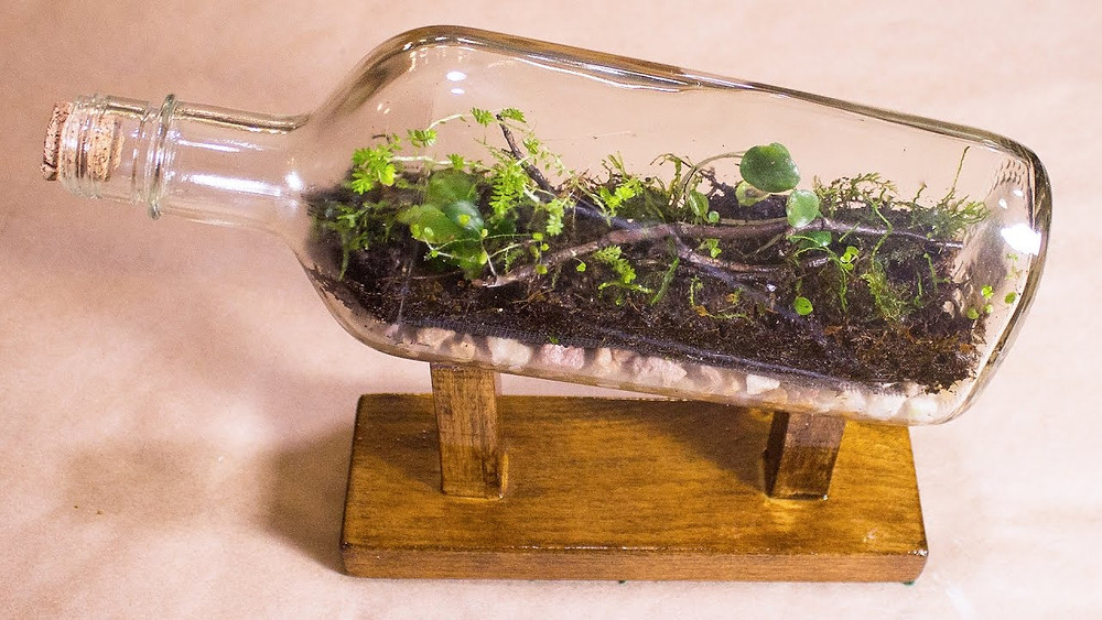Upcycled glass bottle terrarium
