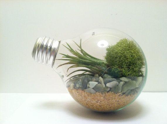 lightbulb terrarium diy