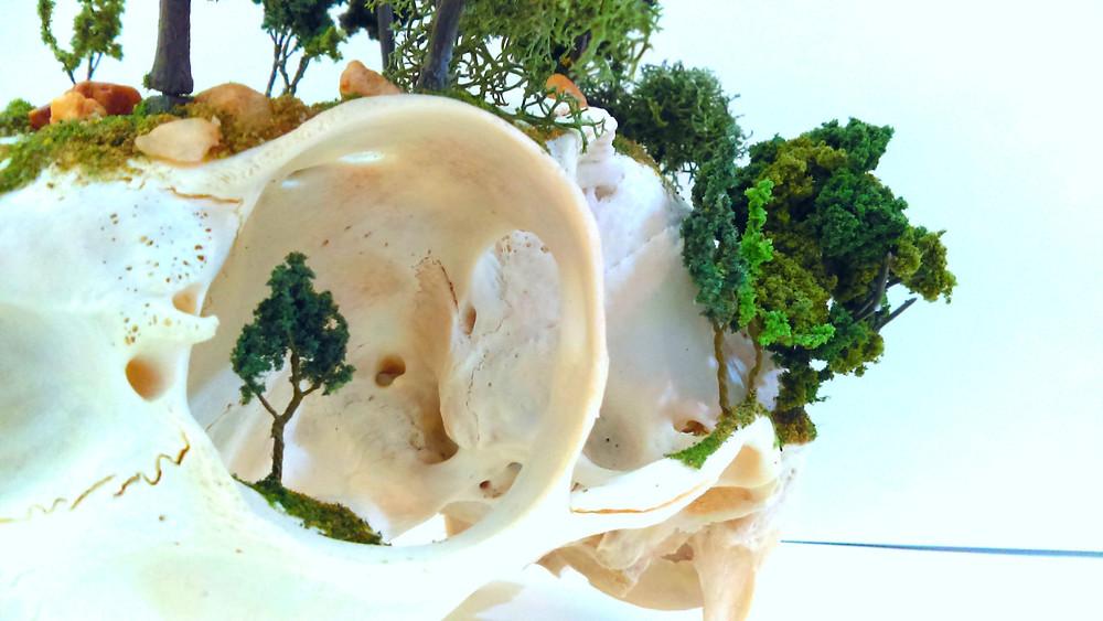Bone & Skull Art | Taxidermy Landscapes | Taxidermy Diorama