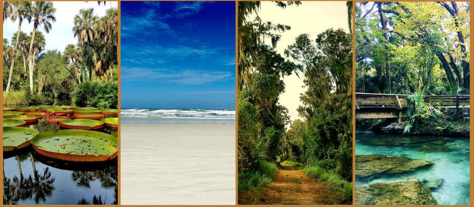 Florida's Hidden Natural Gems, Lush Botanical Gardens And Stunning Beaches, It's All Here!