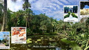 In 2021 Add Serenity To Your Bucket List ~ Explore Florida's Botanical Beauty
