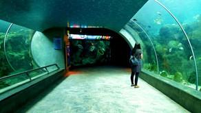 The Florida Aquarium In Tampa Bay Makes Social Distancing Top Priority